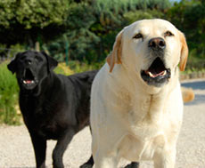 Neighbour Law Part 2: Nuisance and Trespass, Issues with Animals, Noises & Smells